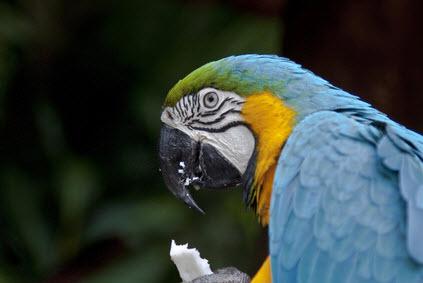Vogel in Rio